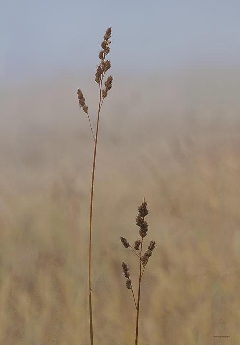 Ron Jones - Autumn Grass