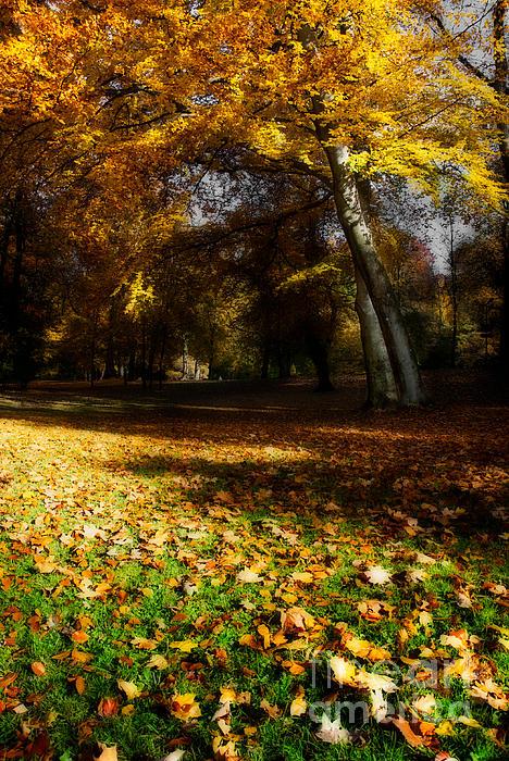 Autumn Print by Hannes Cmarits