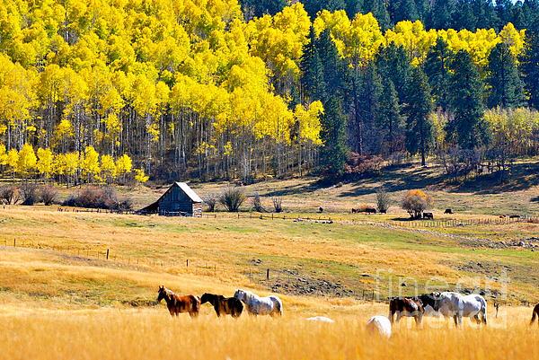 Johanne Peale - Autumn In Pagosa