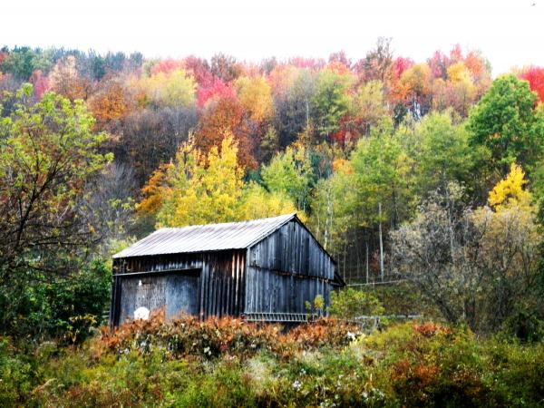 Jeanette Oberholtzer - Autumn in Potter County PA
