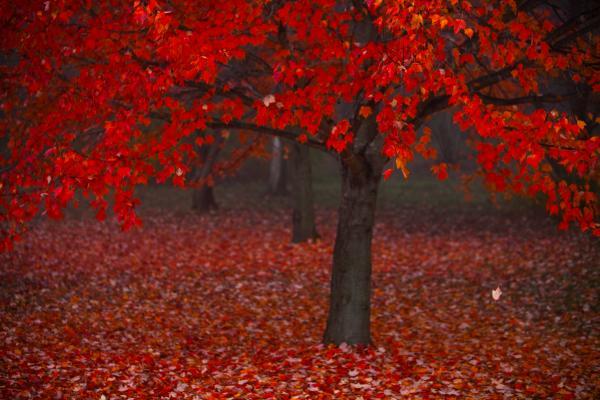 Autumn Print by Jane Melgaard