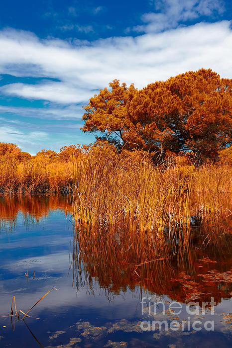 Autumn Landscape Print by Gabriela Insuratelu