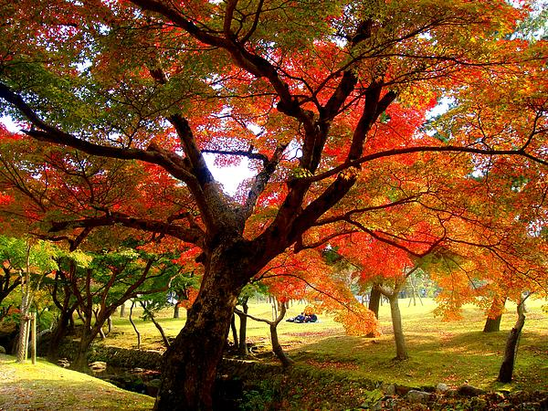 Autumn Leaves 2 Photograph