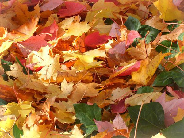 yenne lee autumn leaves pdf