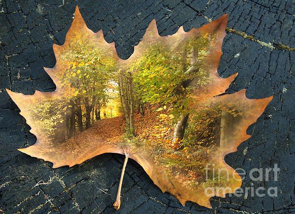 Lyn Evans - Autumn leaves