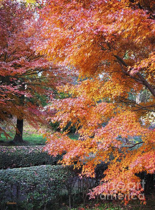 Eena Bo - Autumn Momiji
