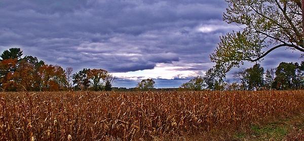 Autumn Overcast 12 Print by Dave Dresser