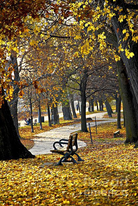 Autumn Park In Toronto Print by Elena Elisseeva
