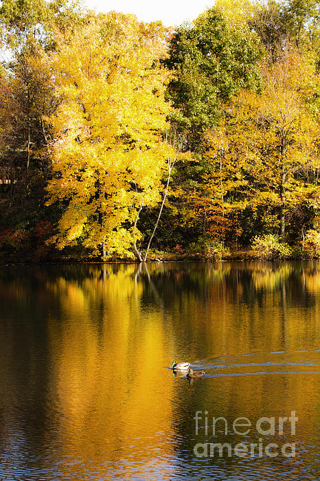 Autumn Pond Print by Leslie Leda