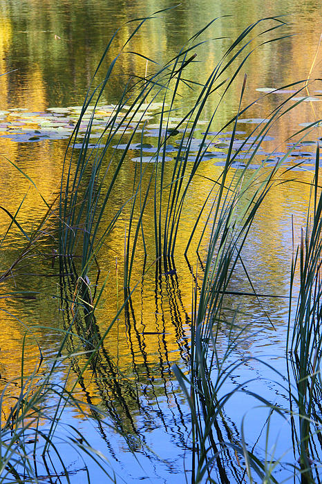 Doris Potter - Autumn pond with reeds