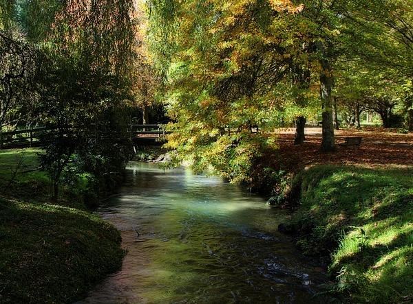 Judy Watson - Autumn Reflections