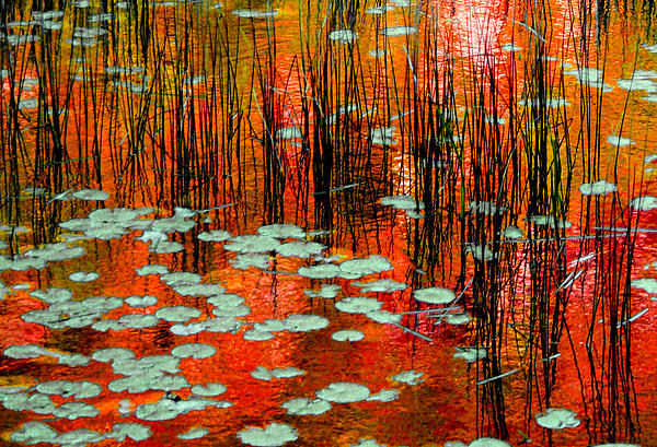 Autumn Reflections Print by Trevor Slauenwhite