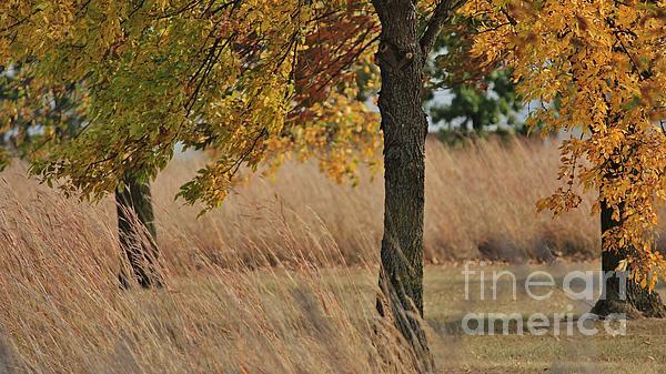 Regen Ingalls - Autumn