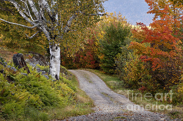Autumn Road - D005840 Print by Daniel Dempster