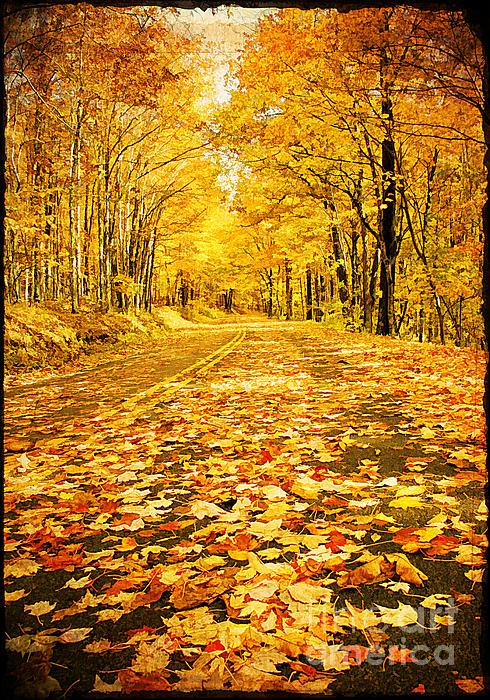 Autumn Road Print by Darren Fisher