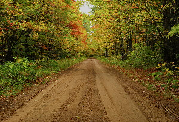 Autumn Road Print by Michael Peychich