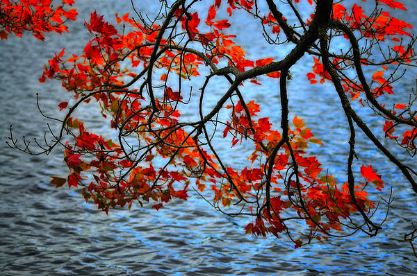 Autumn Scene - Little Pond  New Hampshire Print by Thomas Schoeller