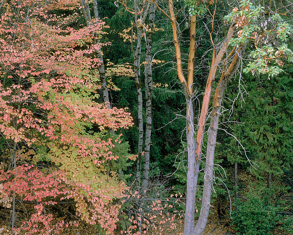 Autumn Scene Print by Mark Greenberg