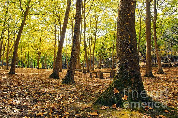 Autumn Scenery Print by Carlos Caetano