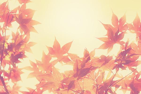 Autumn Sky Print by Amy Tyler