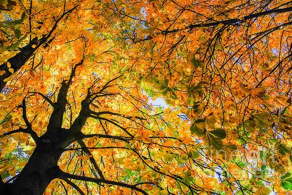 Autumn Sky Print by Hannes Cmarits