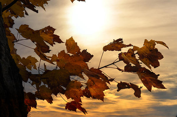 Autumn Splendor Print by Bill Cannon
