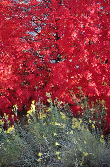 Autumn Splendor In Zion National Park Print by Bruce Gourley
