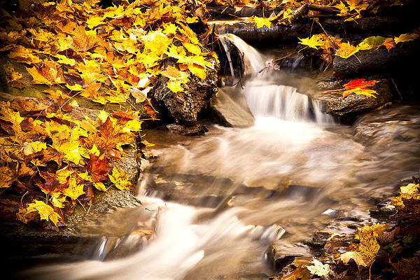 Autumn Stream No 1 Print by Kamil Swiatek
