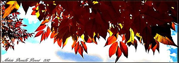 Autumn Sun Glory Print by Danielle  Parent