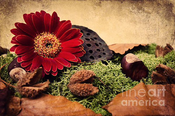 Autumn Time Print by Angela Doelling AD DESIGN Photo and PhotoArt