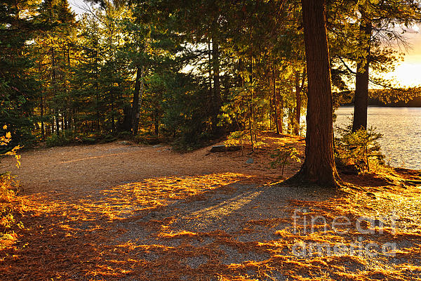 Autumn Trees Near Lake Print by Elena Elisseeva
