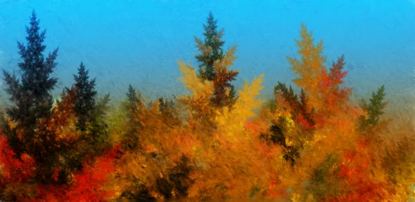 Autumnal Forest Print by David Lane