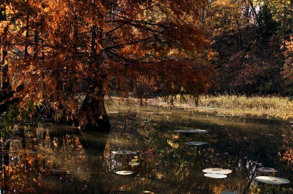 Autumnal Solace Photograph