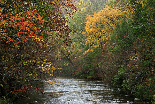 Autumn's Splendor Print by TnBackroads Photography