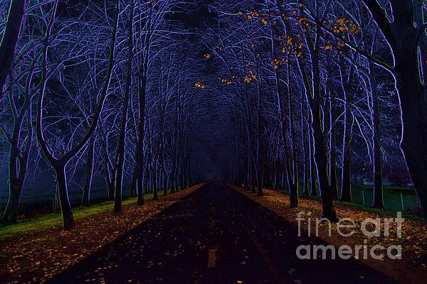 Avenue Of Trees Print by Michal Boubin