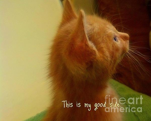Garnett  Jaeger - Baby kitty