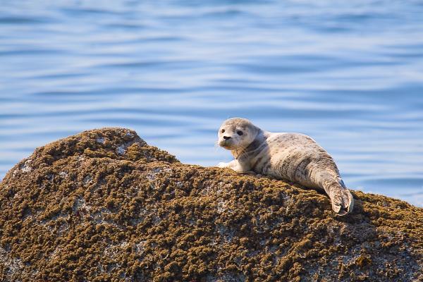 Naman Imagery - Baby Seal