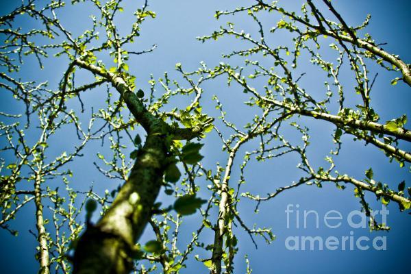 Baby Spring Tree Leaves 02 Print by Ryan Kelly