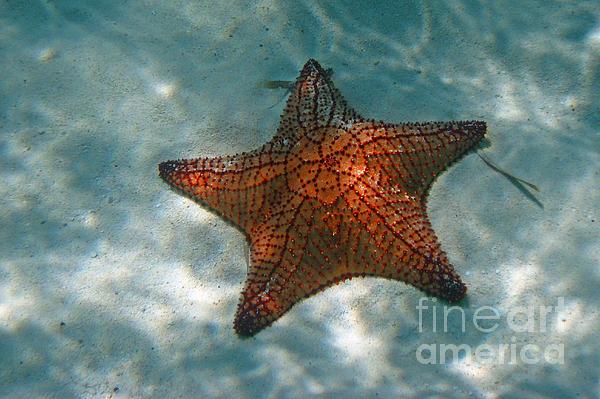 Bob and Nancy Kendrick - Bahamas Starfish