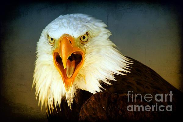 Teresa Zieba - Bald Eagle 3