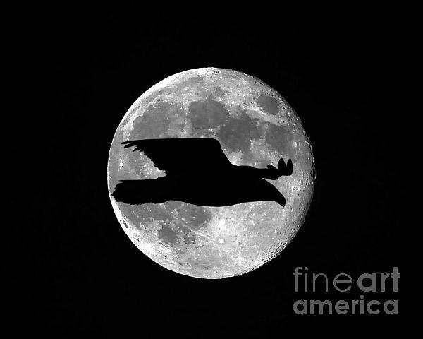Bald Eagle Moon Print by Al Powell Photography USA