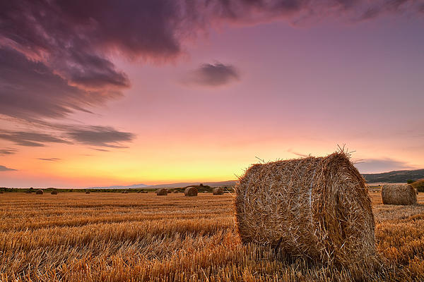 Bales At Twilight Print by Evgeni Dinev