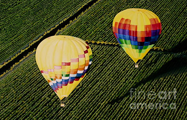 Balloons Over Napa Valley Print by Cindy Lee Longhini