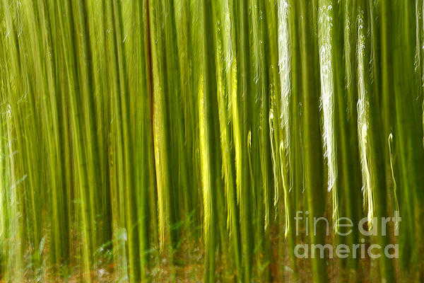 Bamboo Abstract Print by Gaspar Avila
