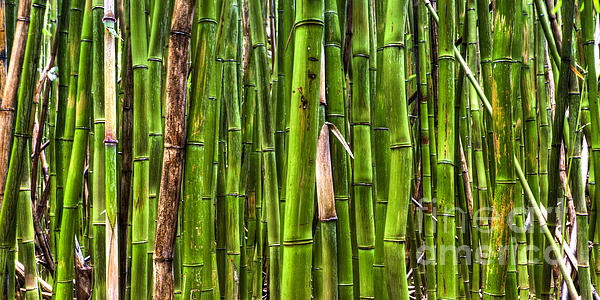 Bamboo Print by Dustin K Ryan