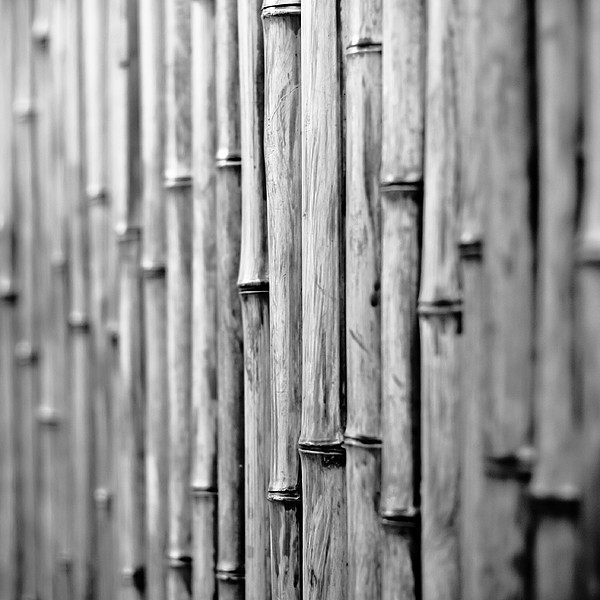 Bamboo Fence Print by George Imrie Photography