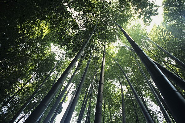 Bamboo Forest Print by Mitch Warner - Printscapes