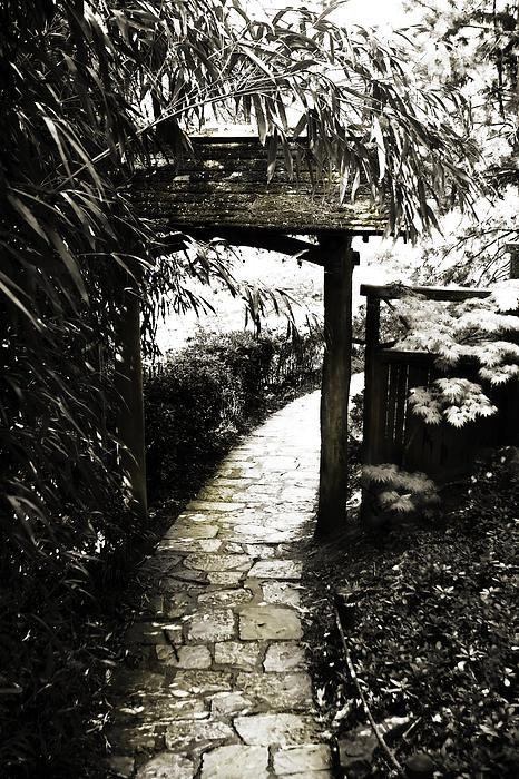 Bamboo Garden - 1 Print by Alan Hausenflock