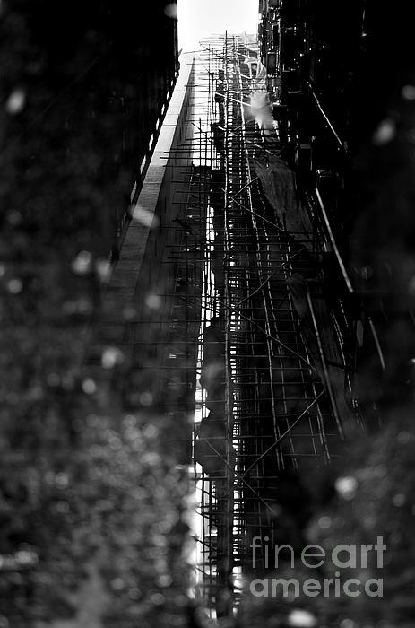 Dean Harte - Bamboo Reflections