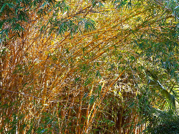 Bamboo Stand Please Buy Me Print by Michael Clarke JP